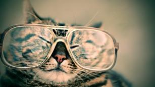 cat-984097_960_720