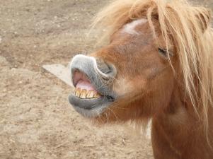 pony-54014_960_720