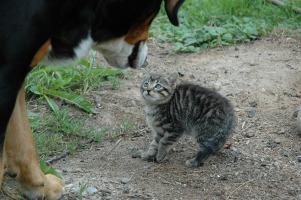 cat-245750_960_720